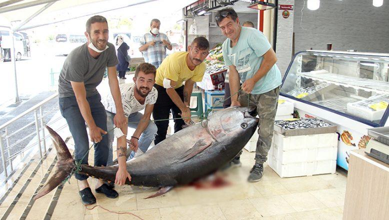 Enez'de yakalandı tam 141 kilogram