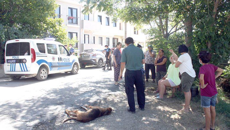 Zehirlendiği iddia edilen 5 köpekten 1'i telef oldu