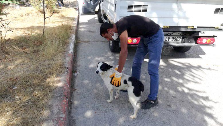 Sokak hayvanları için, 112 acil müdahale ekibi