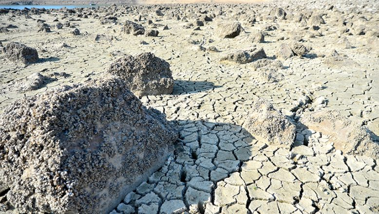 Barajın suyu azalınca, havzasından midye tarlası çıktı