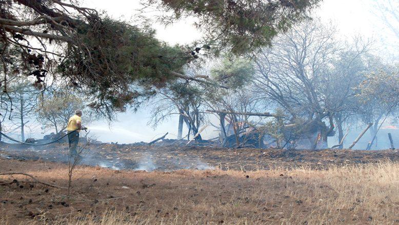 Yangın, 50 dönüm tarım arazisine zarar verdi