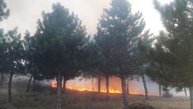 Mesire alanında çıkan yangın söndürüldü