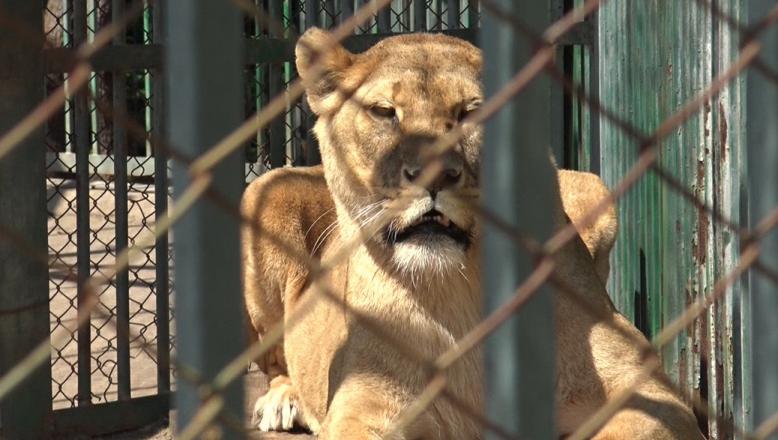 Uluslararası örgüt Bulgaristan'daki hayvanat bahçelerini eleştirdi