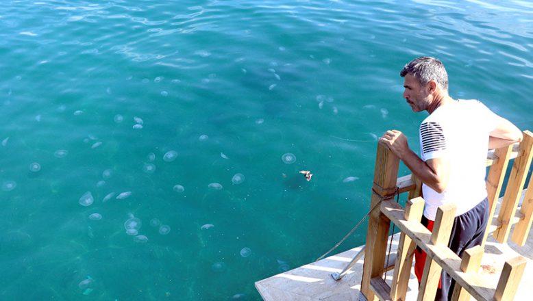 Denizanası sayısındaki artış, vatandaşları da şaşırttı
