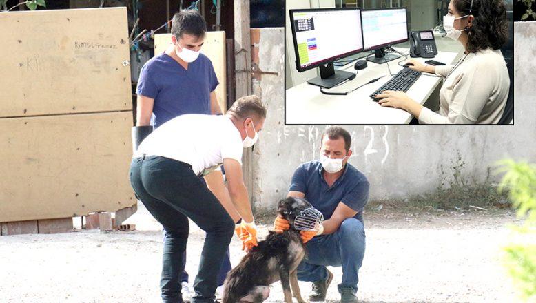 Yaralı ve hasta hayvanlara şifa dağıtıyorlar