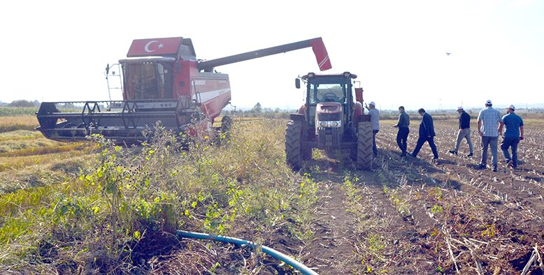 Damlama Sulama ile yetiştirilen çeltikler hasat edildi