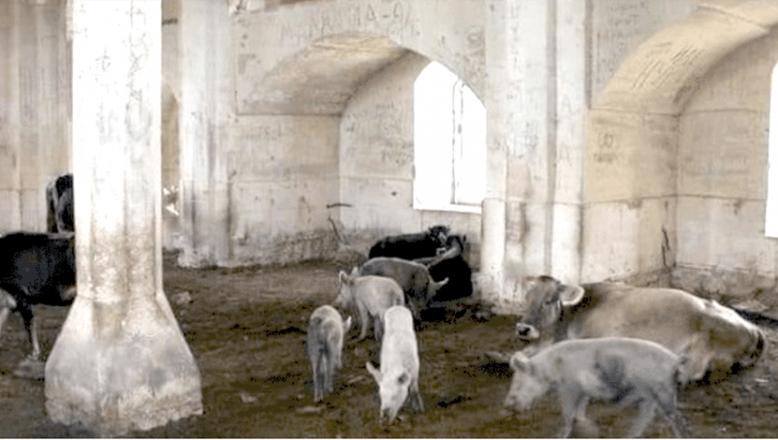 İşgalci Ermeniler, tarihi camiyi domuz ahırına çevirmişler