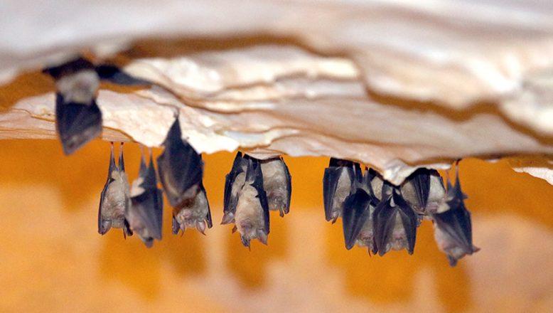 Binlerce yarasaya ev sahipliği yapıyor