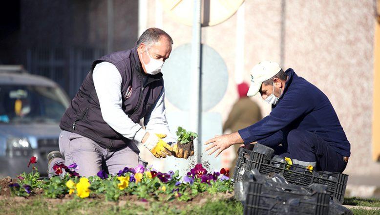 Çiçek ekimleri devam ediyor