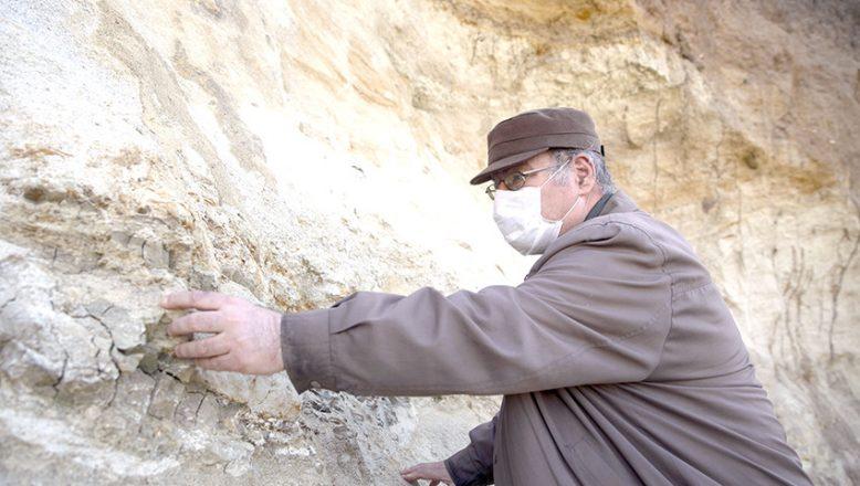 Edirne'de mamut fosili bulundu