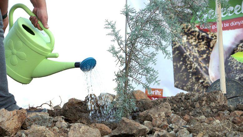 """""""81 ilde 81 bin fidan toprakla buluşuyor!"""""""
