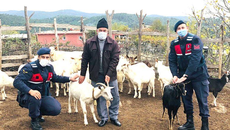 Kaybolan koyunlar, drone yardımıyla bulundu