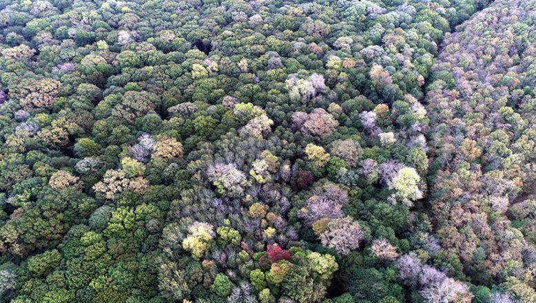 Longoz Ormanları, güz renkleriyle büyülüyor