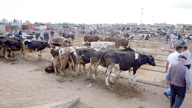 Hayvan pazarı cuma günleri kurulacak