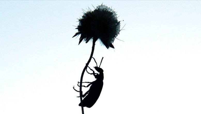 AB'den, 'böcek yenebilir' görüşü
