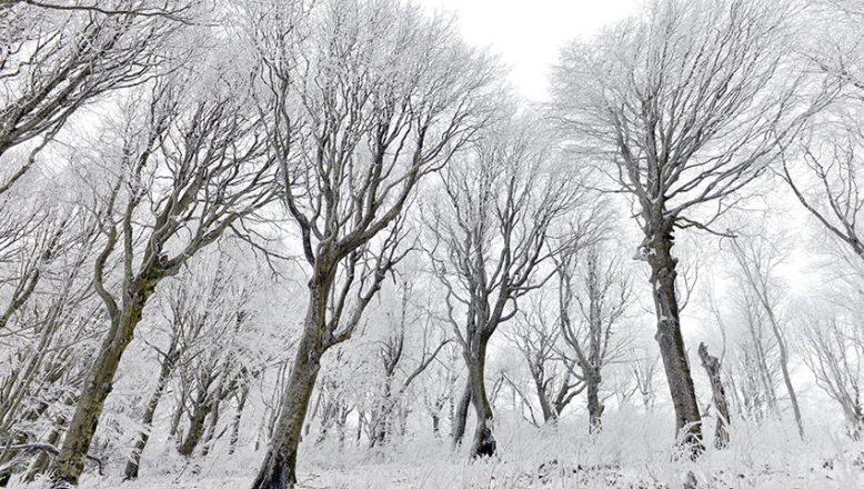 Buzla kaplı ağaçlar hayran bırakıyor