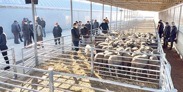 Hayvancılık projesinde 2. etap
