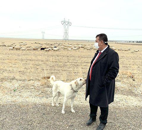 """""""Nüfus başına küçükbaş hedefine 7 yılda ulaşılır"""""""