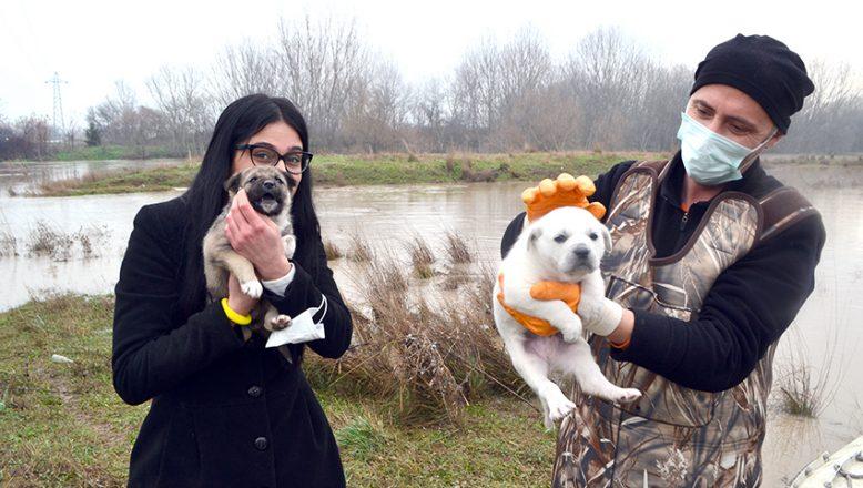 Adacıkta mahsur kalan köpek yavruları kurtarıldı