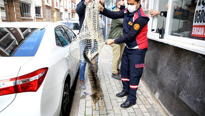 Boş dükkanda mahsur kalan kedi, kurtarıldı