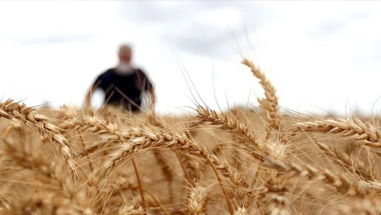 Buğday satın alınacak
