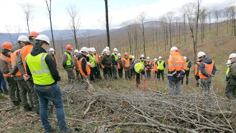 Ormanda üretim ve verimlilik tatbikatı