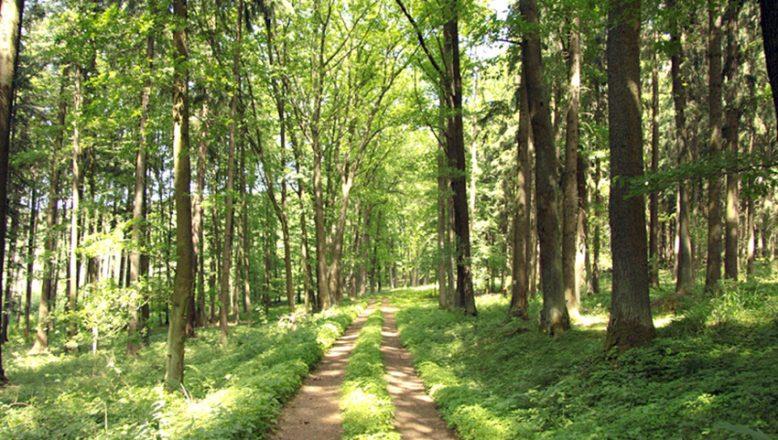 Orman yolu sanat yapısı ve üst yapım işleri yaptırılacak