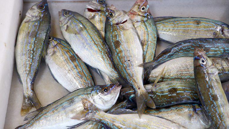 Tezgahların yeni gözdesi menekşe balığı