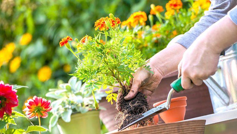 Çiçek temini ve dikimi yaptırılacak