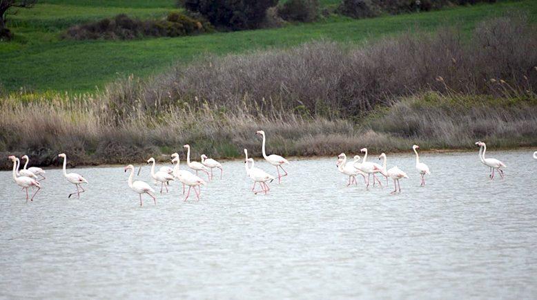 Flamingolarla ayrı bir güzelliğe büründü