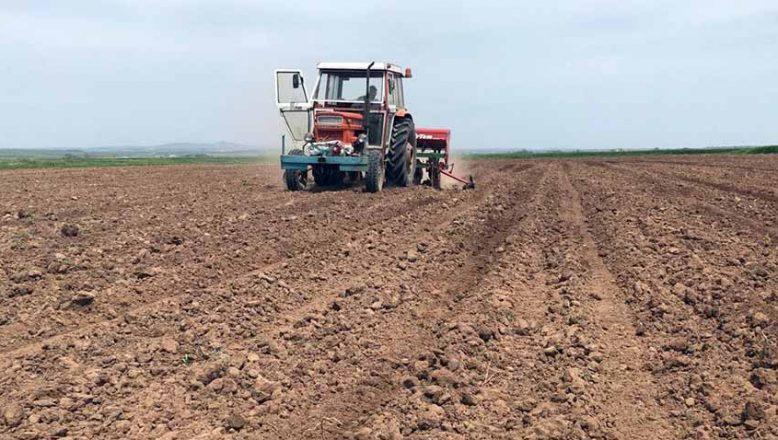 Ayçiçek tohumları toprakla buluştu