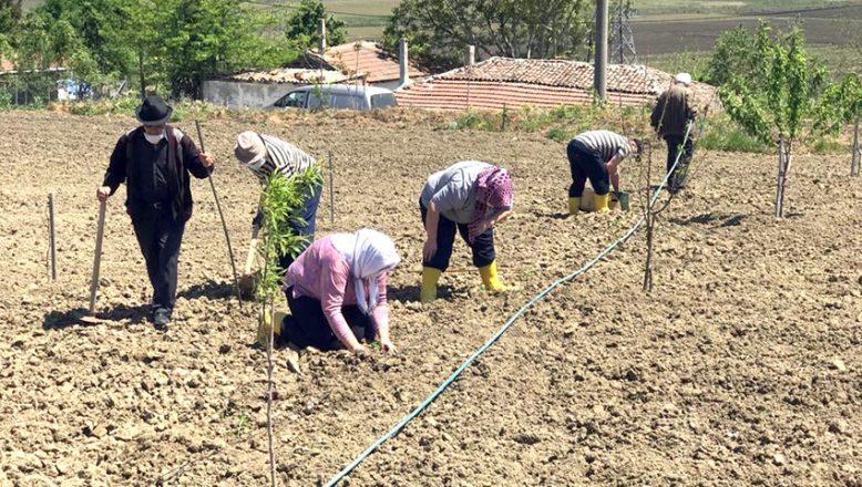Huzurevi sakinleri tarımsal faaliyette