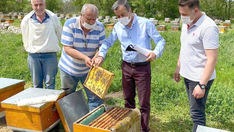 Meşe balı üreticilerinin koloni kontrolleri yapıldı