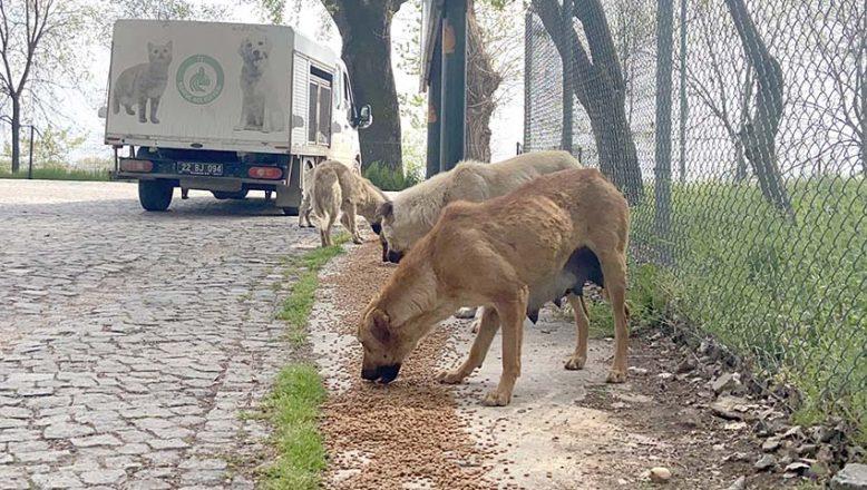 Sokağa terk edilen hayvan sayısı artıyor