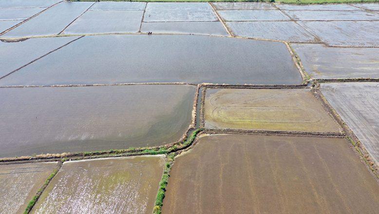 500 bin dönümden fazla ekim yapıldı