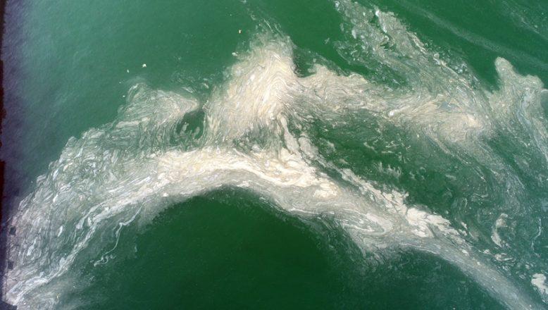 Deniz Salyası suda, beyaz tabaka oluşturdu