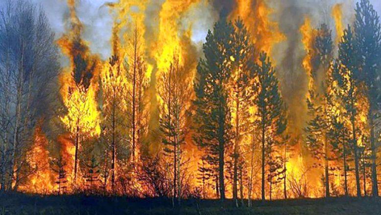 Yangın söndürülmesi ile araç kiralama hizmeti alınacak
