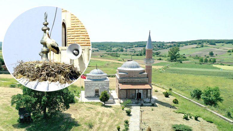 Tarihi camii göçmen kuşlara yuva oldu