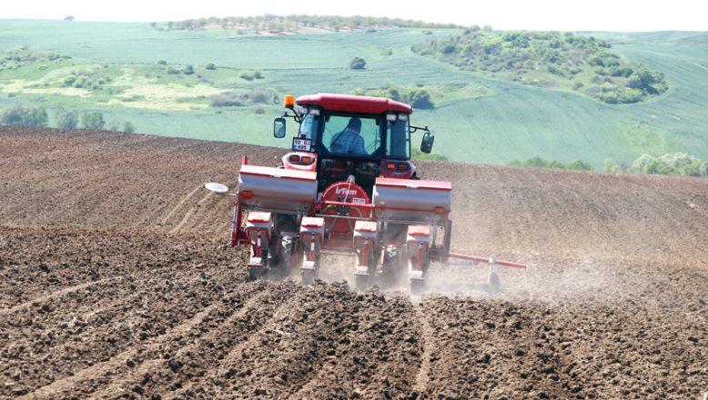 Tam Kapanma sürecinde ayçiçeği tohumları toprağa düşüyor