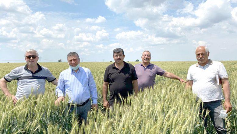 Trakyalı çiftçi halis buğdayı sevdi