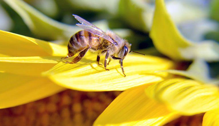 Arıların soktuğu 5 kişiden biri yaşamını yitirdi