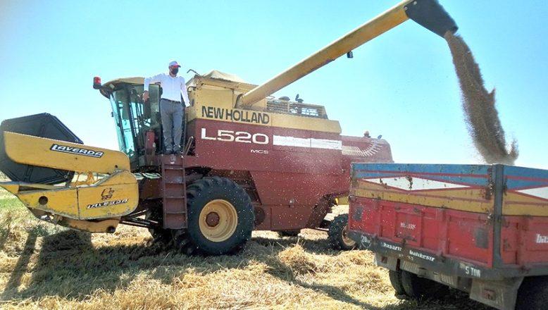 Buğday hasadı sona erdi