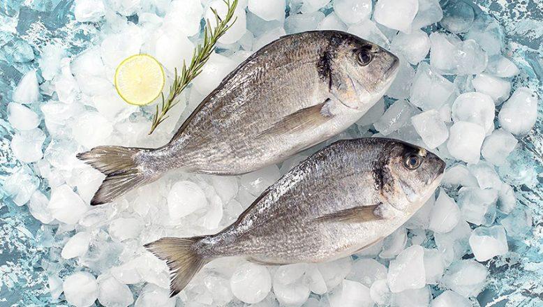 Dondurulmuş balık alınacak