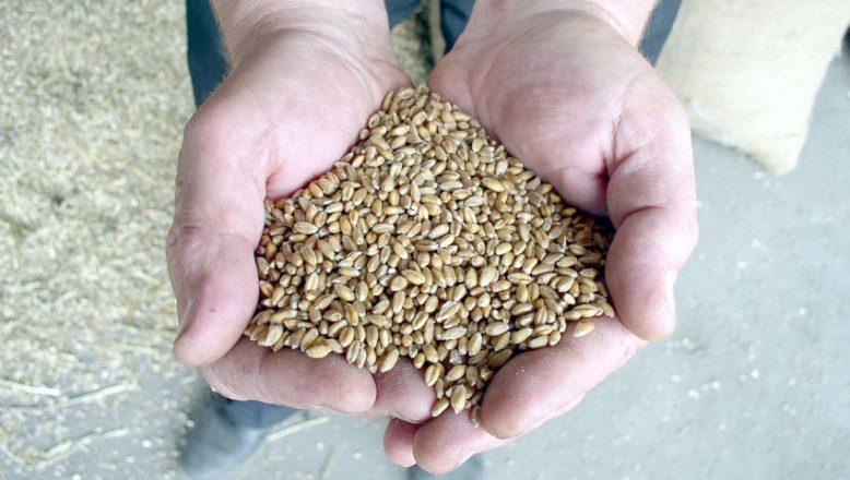 Anadolu kırmızı sert buğdayın kilogramı en yüksek 3,022 liradan satıldı