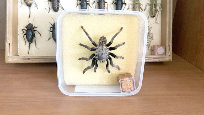 Omurgasızlar Müzesi'nde 2 bin böcek türü sergileniyor