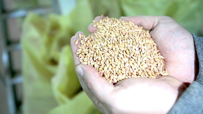 Trakya'nın tohumu Karabağ'da filizlenecek